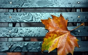 leaf_fall_drop_rain