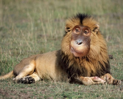 Monkey-Lion-1280-1024(polop.ir)