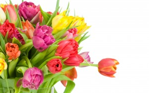 Beautiful_Tulips_Wallpapers_laba.ws