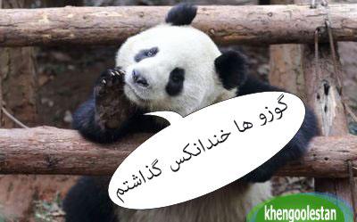 khengoolestan_khandanax_خندانکس_خنگولستان (12)
