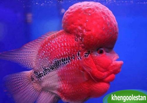 khengoolestan.com_khandanax (10)