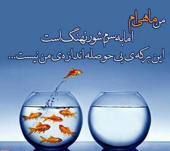 khengoolestan_mahi_nahang_asheghe_parvaz