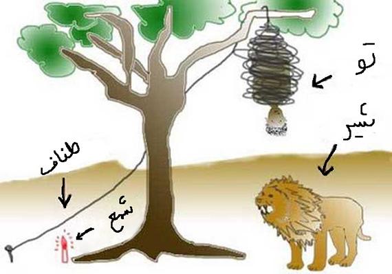 aslan-soru
